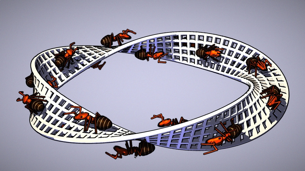 ants.thumb.jpg.b5d47b071237b919cc89cd9d6dad60c8.jpg