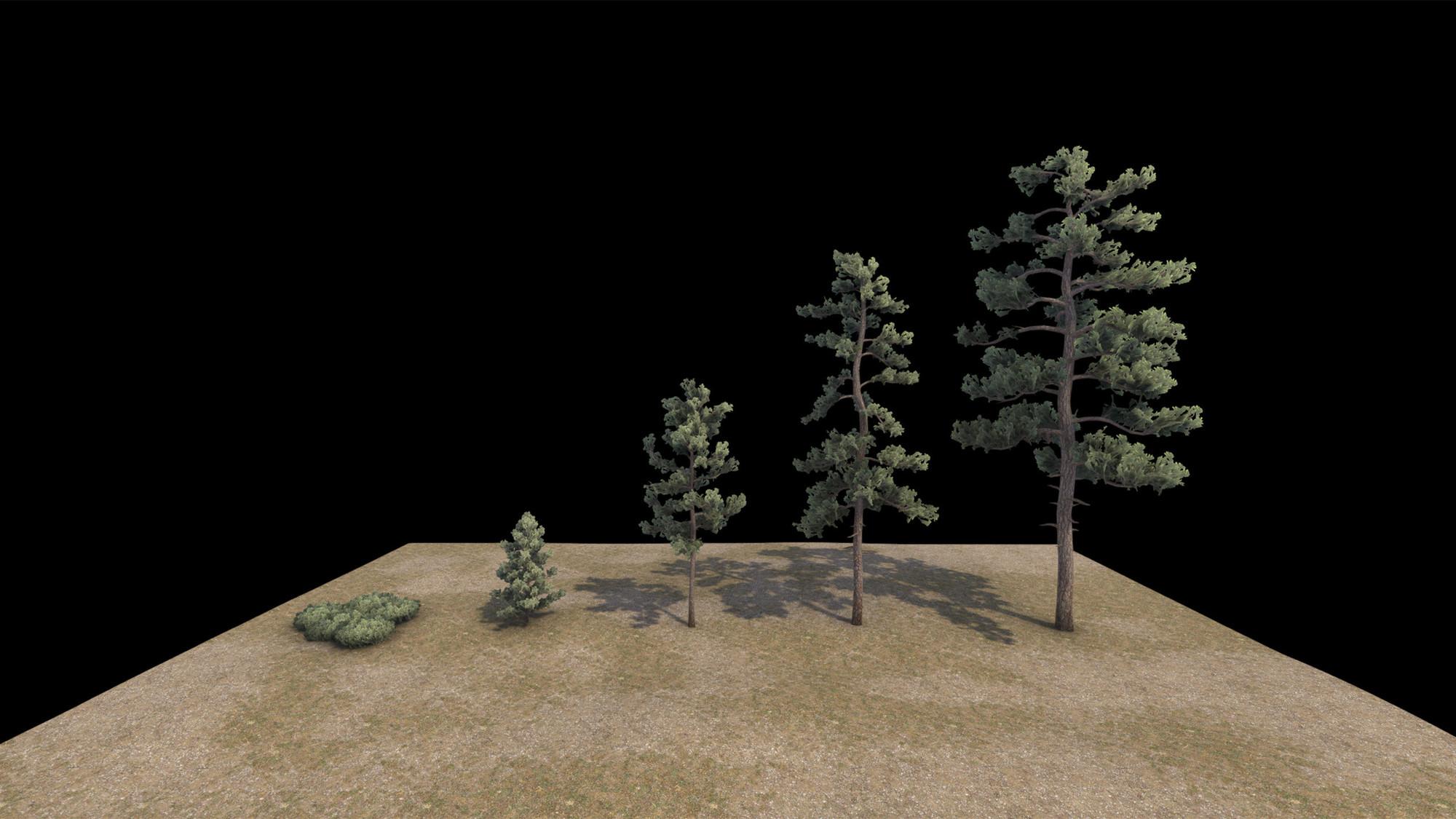 pine_family.thumb.jpg.8b4190d4df8f324c18a6c350f64300e1.jpg