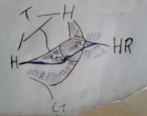 tori_layout_drawing.JPG.ba87471ca2a532b95da2fc0012f3b312.JPG
